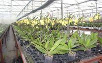 Bí quyết để Lâm Đồng dẫn đầu phát triển nông nghiệp công nghệ cao