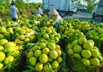 Một số vấn đề về khuyến khích phát triển nông nghiệp công nghệ cao
