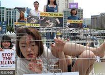 Các cô gái Hàn Quốc nằm trong lồng sắt để phản đối ăn thịt chó