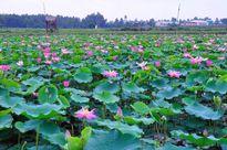 'Ghé thăm' địa danh du lịch nổi tiếng bậc nhất đồng bằng sông Cửu Long