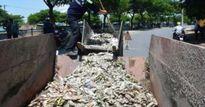 Cá chết nổi trắng, bốc mùi hôi thối trên sông Phú Lộc