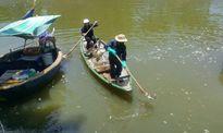 Cá chết kéo dài hàng cây số trên sông Phú Lộc - Đà Nẵng