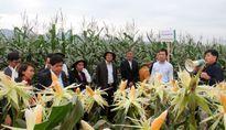 Hà Nội phấn đấu gieo trồng 39.000ha cây vụ Đông