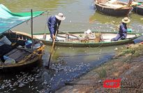 Đà Nẵng: Cá lại chết nổi đầy kênh Phú Lộc