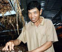 Lãi 15 triệu đồng/tháng chỉ với 260m2 trồng nấm