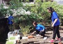 Thanh niên Thủ đô vào cuộc phòng chống sốt xuất huyết