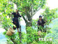 Sản xuất hữu cơ góp phần nâng cao vị thế nông nghiệp Việt Nam