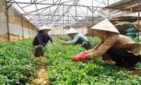 Thúc đẩy nông nghiệp công nghệ cao