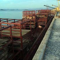 Quảng Ninh: Tiêu hủy gần 7 tấn lợn chết, đang phân hủy