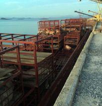 Quảng Ninh: Bắt giữ gần 7 tấn lợn chết tại cảng Mũi Chùa
