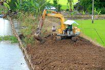 Kiên Giang: Lo bảo vệ cả lúa thu đông và lúa hè thu