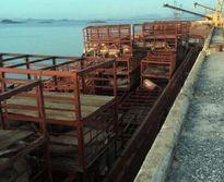Quảng Ninh: Tóm gọn 7 tấn lợn chết tại cảng Mũi Chùa