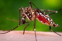 Vì sao sốt xuất huyết tăng mạnh vào mưa?