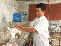 Những ngư dân 'gác chèo' nuôi thỏ thu hơn 1 tỷ đồng/năm