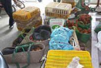 Truy xuất nguồn gốc thịt và trứng gia cầm để đảm bảo sức khỏe người dân