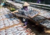 Làng cá nướng Nghệ An: Trời nóng 40 độ vẫn 'bám' bếp