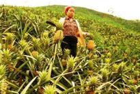 Công bố truy xuất nguồn gốc điện tử nhiều nông sản