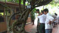 Cây hoa giấy Trung Quốc trả 2tỷ: Lời thật dân chơi Việt