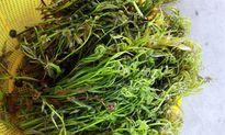 Những điều ít biết về rau đọt choại 'thời thượng' của Hậu Giang