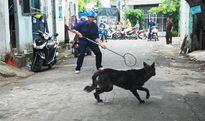 Bắt chó thả rông: Cần thiết!