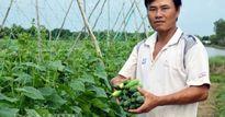 Cách trồng hay: Đất mặn 'khó nhằn', rau màu vẫn xanh, kiếm nhanh 200 triệu