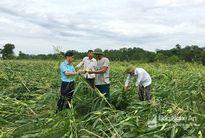 Nghệ An: Các địa phương đề nghị hỗ trợ gần 13 tỷ đồng do thiệt hại sau bão