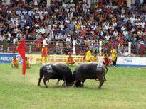Hiến kế tận dụng Lễ hội Chọi trâu Đồ Sơn để phát triển du lịch