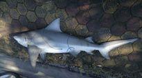 Quảng Ninh thông tin chính thức về việc cá lạ xuất hiện tại bờ biển