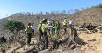 Hơn 60ha rừng tự nhiên bị phá, 2 cán bộ kiểm lâm bị đình chỉ công tác