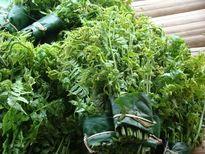 Chế biến nhiều món ngon từ những món đặc sản rau rừng dân giã