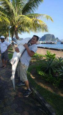 Thực hư bắt được cá mập trên vịnh Hạ Long: Là cá mập mắt lợn 'hiền lành'