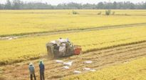 Phát triển Đồng Tháp Mười thành vùng sản xuất, xuất khẩu nông sản trọng điểm