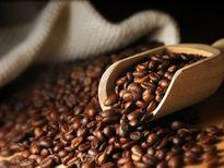 Giá cà phê trong nước ngày 21/9/2017