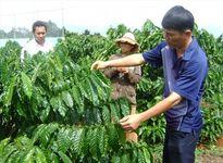 Phân bón Văn Điển bổ sung trung, vi lượng cho cây trồng