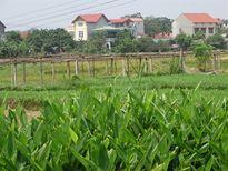 Vĩnh Yên có 2 xã xây dựng NTM