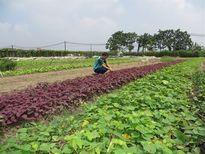TP Vĩnh Yên phát triển sản xuất gắn với tái cơ cấu nông nghiệp