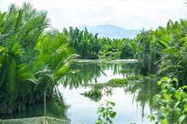 Rừng dừa nước Cà Ninh sắp bị khai tử, chim trời hết chốn nương thân