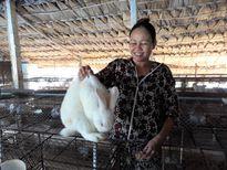 Hướng đi mới từ nghề nuôi thỏ