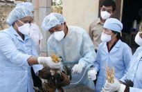 Không lơ là phòng, chống dịch bệnh cho vật nuôi
