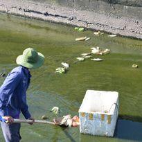 Quảng Nam: Dân lo lắng trước tình trạng cá chết hàng loạt tại hồ Nguyễn Du