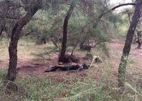 Hoảng hồn phát hiện thi thể chết cháy ở rừng dương