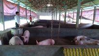 Đề xuất giải pháp xử lý toàn diện chất thải chăn nuôi quy mô trang trại