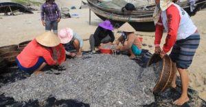 Bủa lưới trúng đậm cá cơm: Ngư dân lãi 20 triệu đồng một buổi sáng