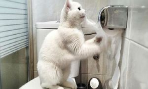 Chú mèo 'lịch sự' nhất hệ mặt trời