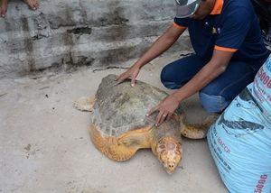 Giải cứu rùa biển lạc vào nhà máy Nhiệt điện Vĩnh Tân