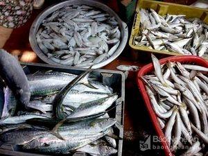 Ngư dân Nghệ An được mùa đánh bắt sau bão