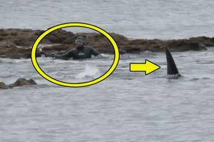 Clip: Sợ 'xanh mặt' trước cảnh cá voi sát thủ rình bắt người