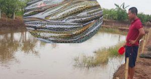 'Ông cử' đất Quỹ Nhất về quê nuôi cá, xuất bán 350 tấn chạch Đài Loan/năm