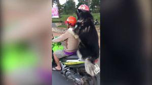 Clip chú chó đội mũ bảo hiểm, ôm chặt anh tài xế gây xôn xao
