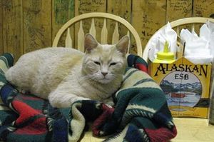 Con mèo 'thị trưởng' Alaska qua đời ở tuổi 20